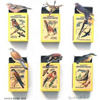 birdmatchbox24